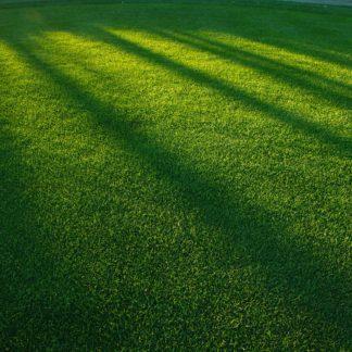 Семене газонных трав, сидератов и медоносов.
