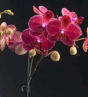 Держатели для орхидей, клипсы