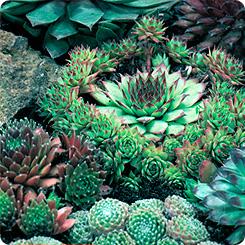 Экзотические и декоративные растения