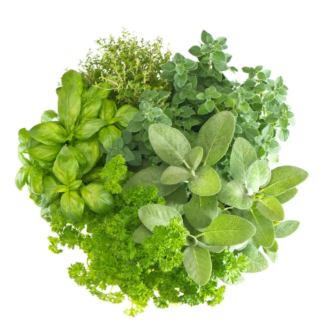 Пряные и лекарственные растения